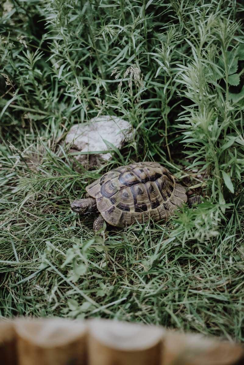 Schildkröte in Wiese