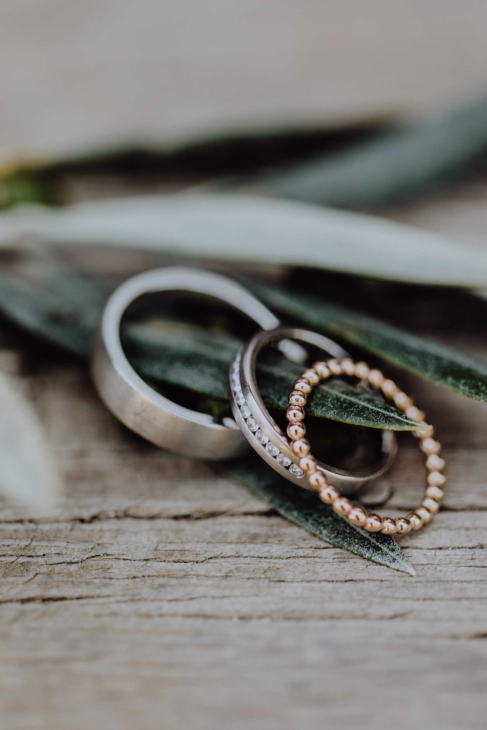 Drei Ringe liegend auf Eukalyptus