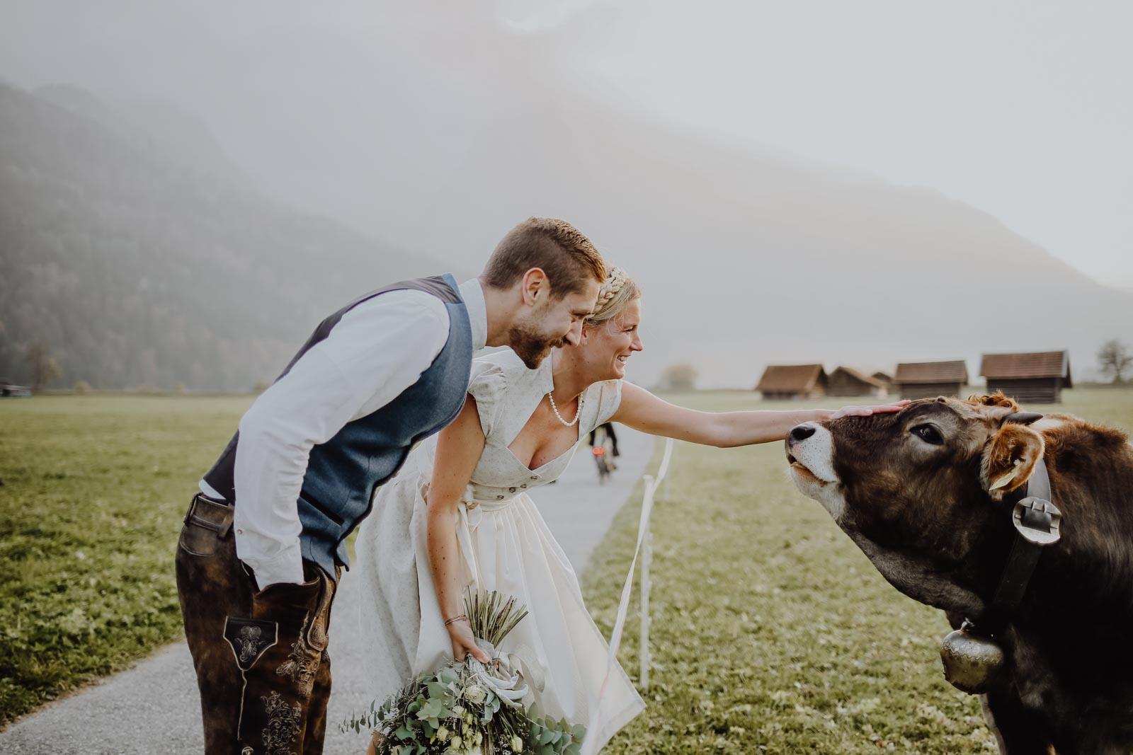 Brautpaar streichelt eine Kuh
