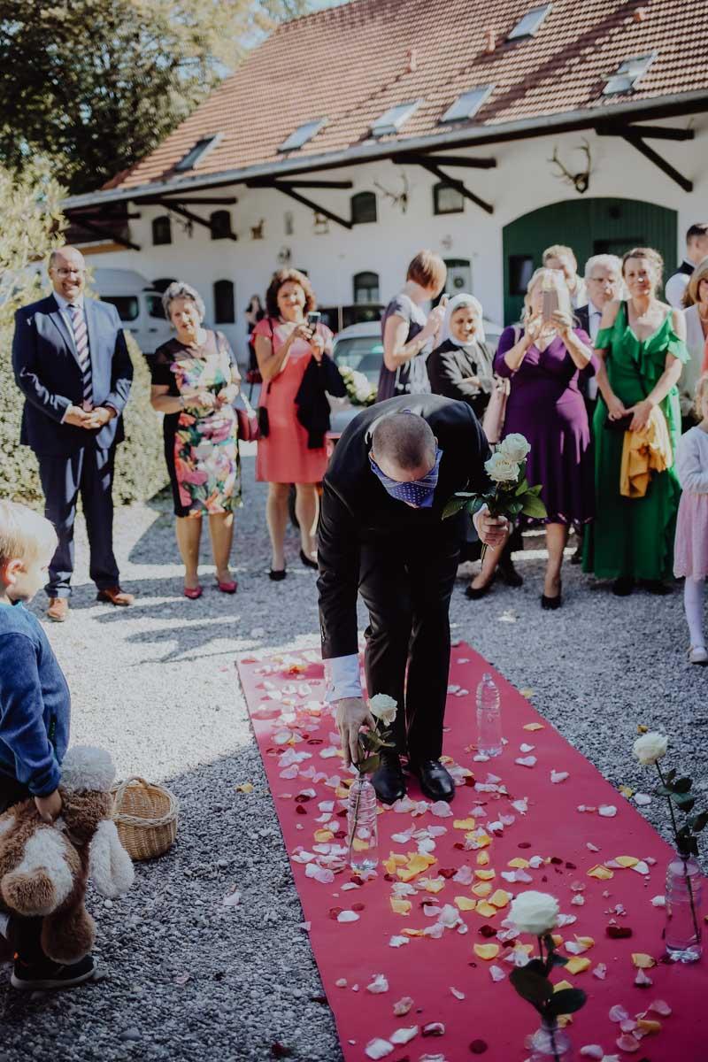 Bräutigam sammelt Rosen auf pinkem Teppich ein